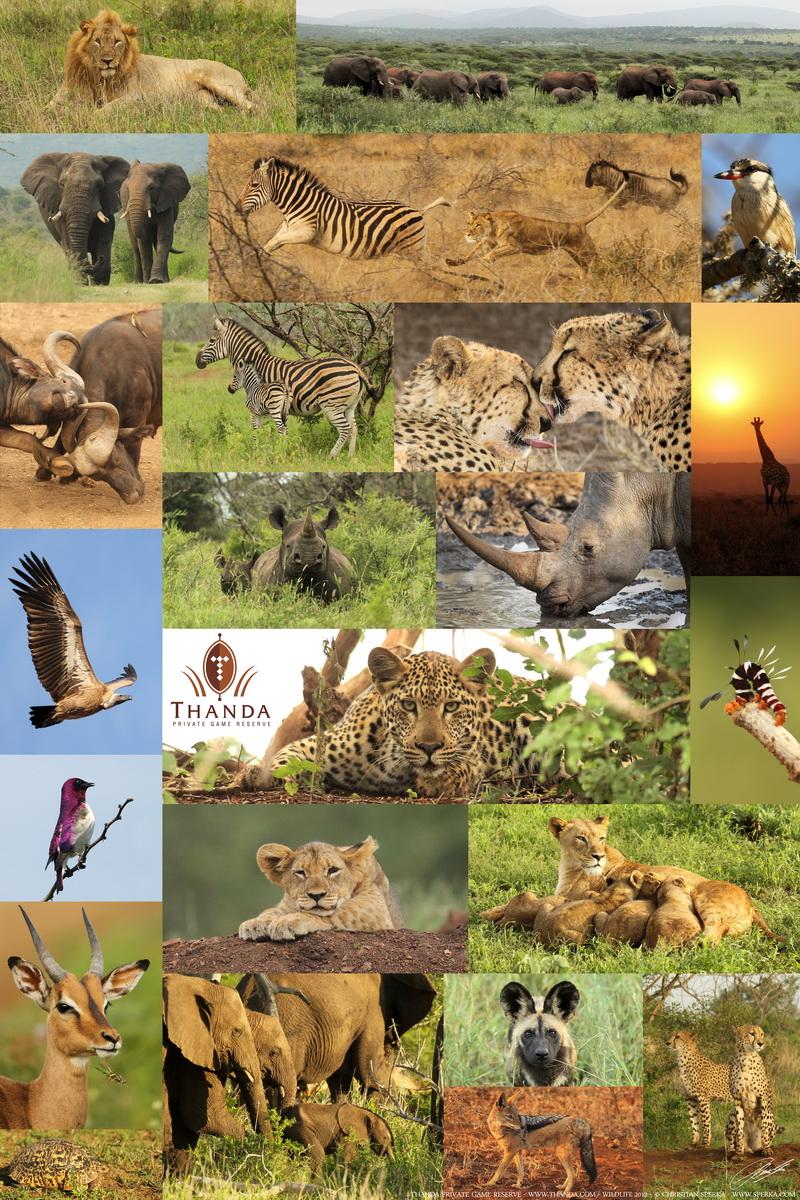 Thanda 2012 Poster - 450 x 600 - SIG