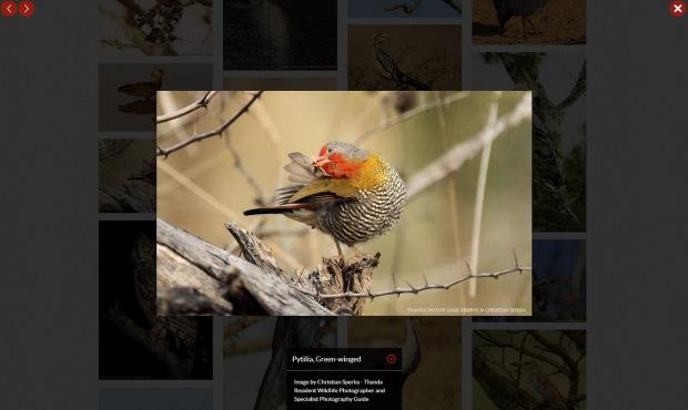 Thanda Birds 2