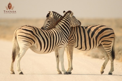 Thanda Romance - Zebra - LOGO - 20110723-CS1_6847