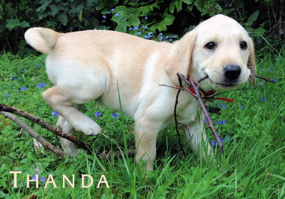 Puppy Thanda
