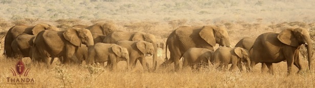 Elephant 5 960