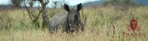 Rhino 5 960