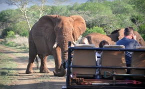 Elefant Encounter