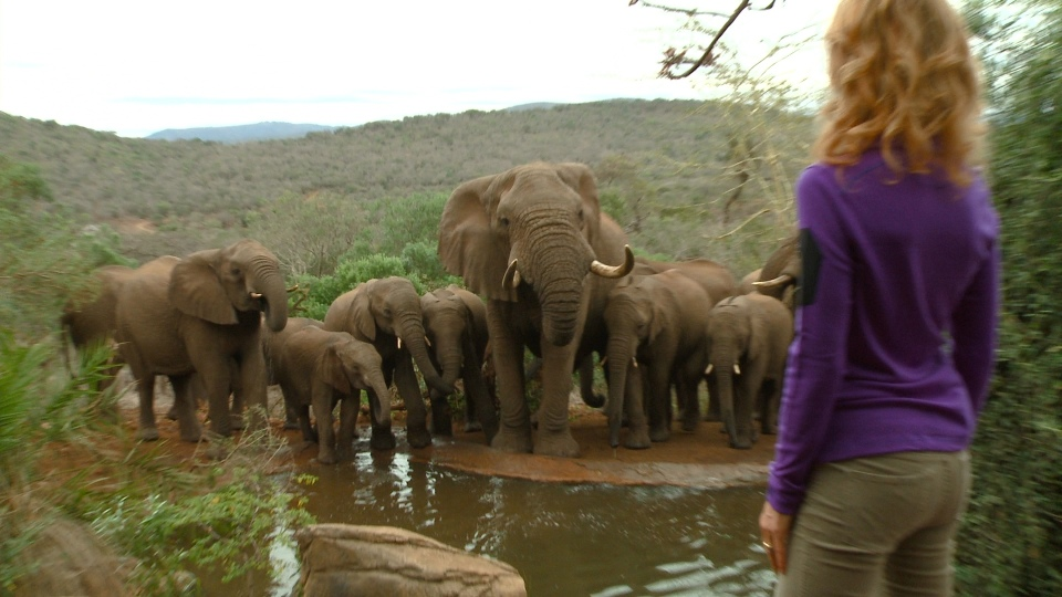 Linda Thanda Elephants