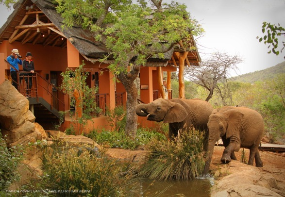 Back at the Lodge with Elephants stopping by to congratulate the happy couple :-)