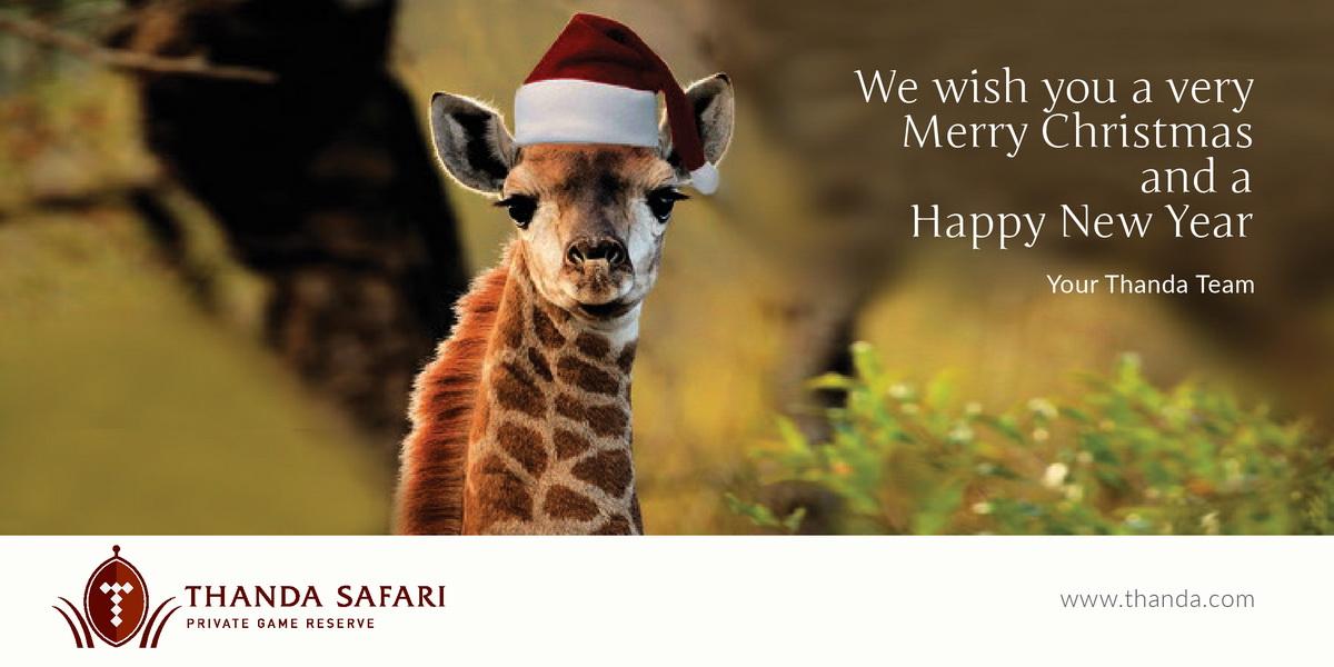 MERRY CHRISTMAS AND A HAPPY NEW YEAR! | Thanda Safari