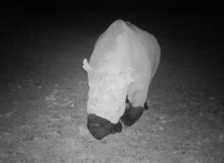 The third picture - Black Rhino - 26 February 2016