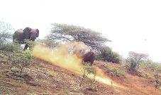 A Rhino chasing off an Elephant