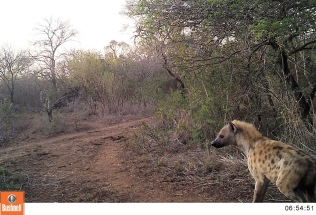 Camera trap day time images ...