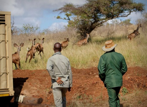 Watching the Kudus moving off ...