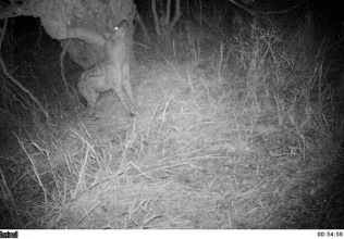 Camera trap night time images ...