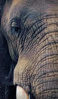 Elephant close-up - through binoculars ...