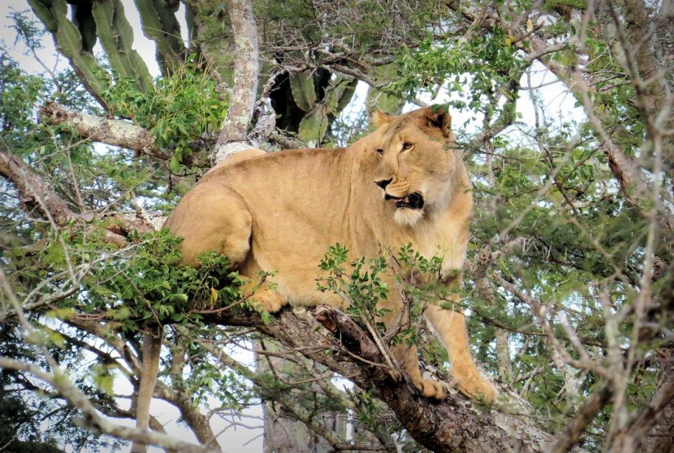 lion-rhino-4