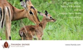 thanda-safari-christmas-2016-1200